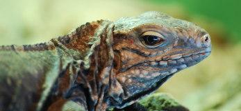 Planeta Reptils